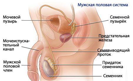 Reproduktív funkció