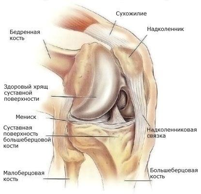 a térd deformáló artrózisának fórumkezelése