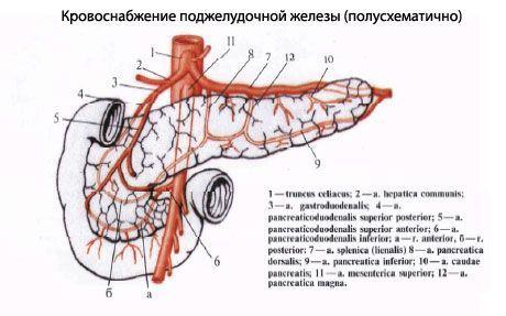 Hasnyálmirigy farok daganat