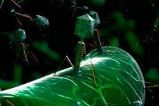 bakteriofágok pikkelysömör kezelése